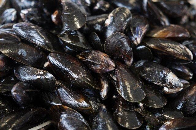 پاکسازی آب با یاری صدف های سیاه!